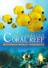 Search netflix Fascination Coral Reef: Mysterious Worlds Underwater